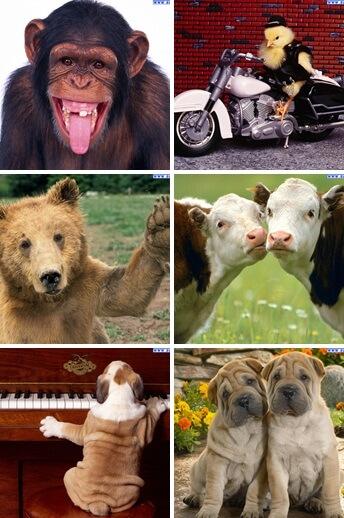 sfondi con animali