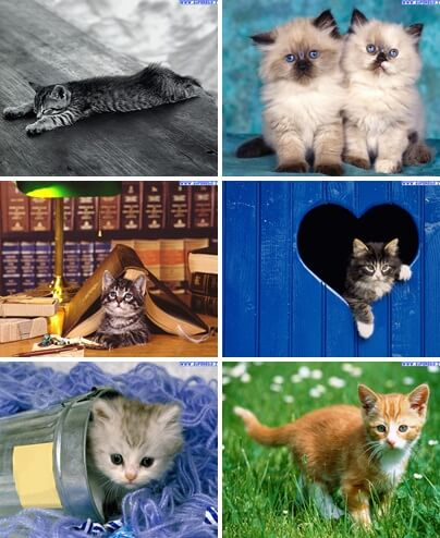 sfondi gattini