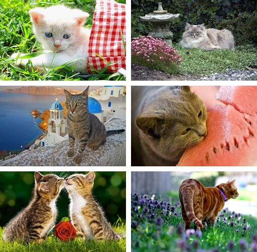 sfondi gatti